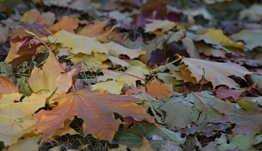 Специалисты уберут сухую листву в поселении Новофедоровское. Фото: архив